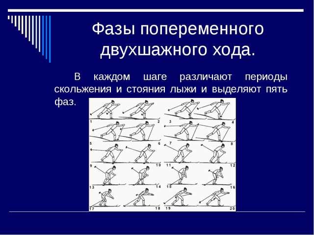 Фазы попеременного двухшажного хода. В каждом шаге различают периоды скольж...