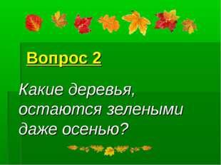 Вопрос 2 Какие деревья, остаются зелеными даже осенью?