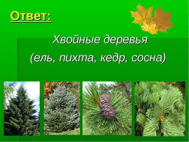 * Ответ: Хвойные деревья (ель, пихта, кедр, сосна)