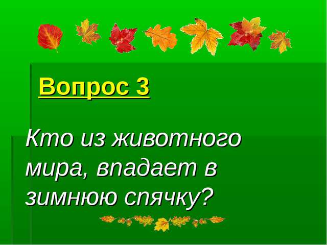 Вопрос 3 Кто из животного мира, впадает в зимнюю спячку?