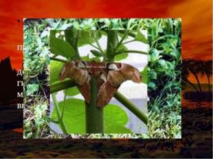 В тропических влажных лесах (джунглях) обитают животные и произрастают растен
