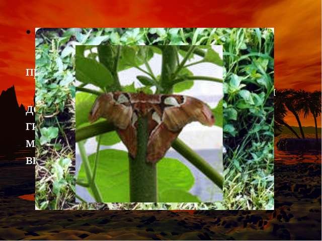 В тропических влажных лесах (джунглях) обитают животные и произрастают растен...