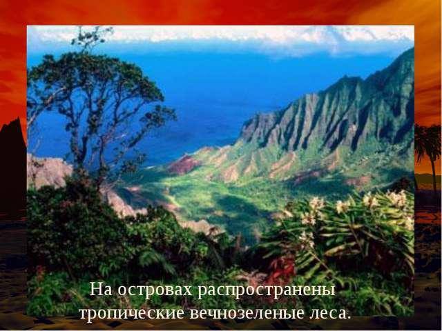 На островах распространены тропические вечнозеленые леса.
