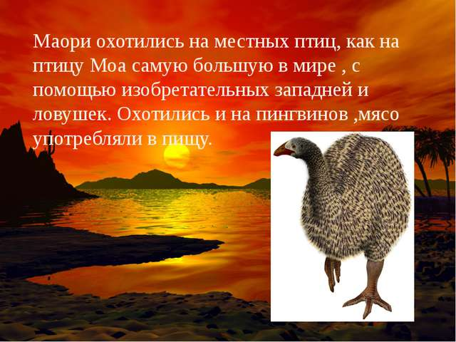 Маори охотились на местных птиц, как на птицу Моа самую большую в мире , с по...