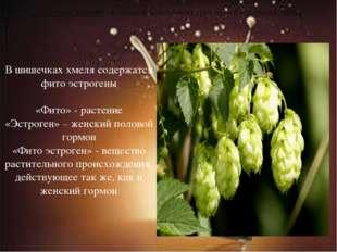 Шишечки хмеля - главный компонент для приготовления пива В шишечках хмеля сод