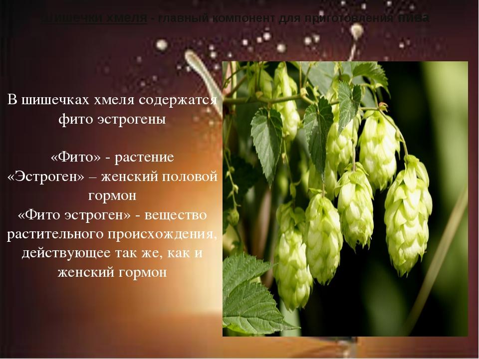Шишечки хмеля - главный компонент для приготовления пива В шишечках хмеля сод...