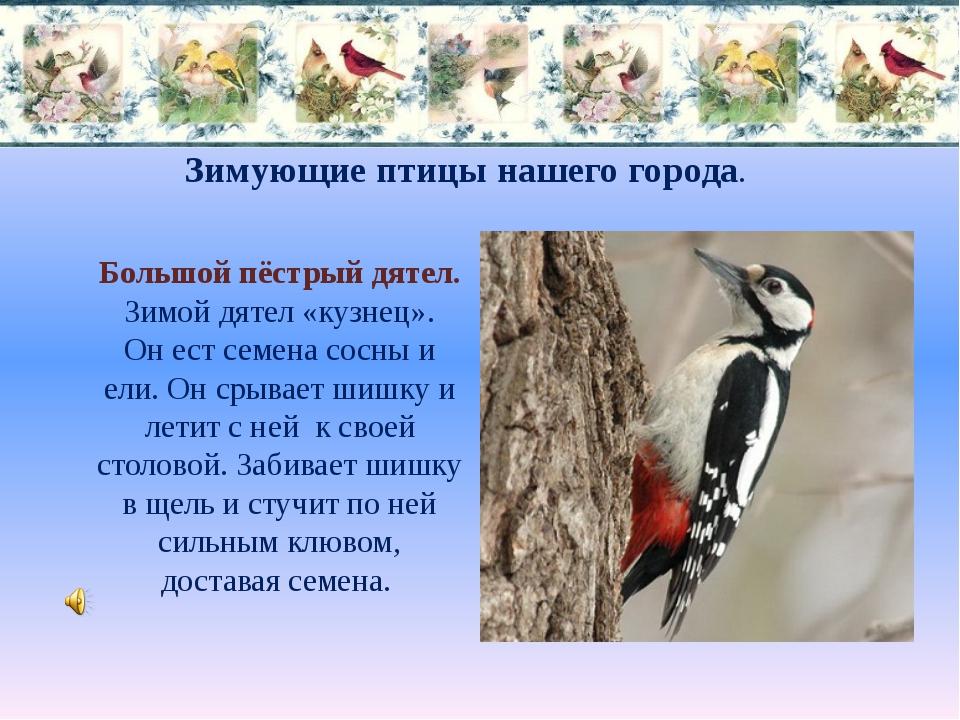 Зимующие птицы нашего города. Большой пёстрый дятел. Зимой дятел «кузнец». Он...