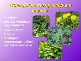 Съедобные дикорастущие травы: крапива листья молодых одуванчиков подорожник с