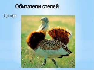 Обитатели степей Дрофа
