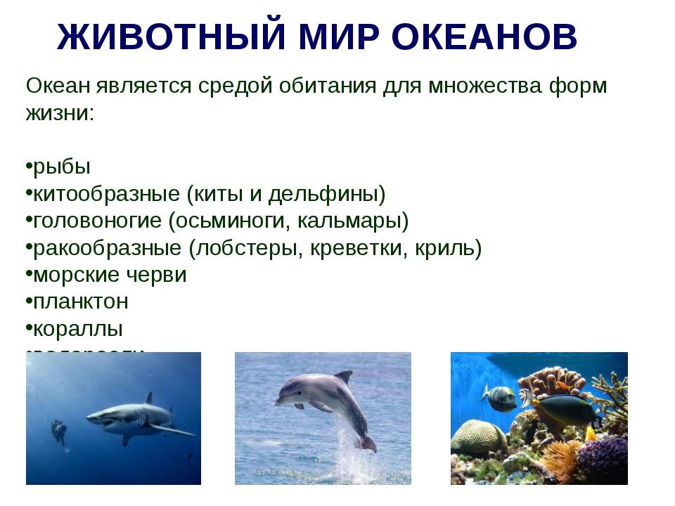 ЖИВОТНЫЙ МИР ОКЕАНОВ Океан является средой обитания для множества форм жизни:...