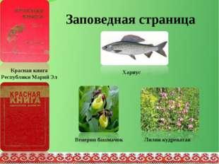 Заповедная страница Хариус Венерин башмачок Лилия кудреватая Красная книга Ре