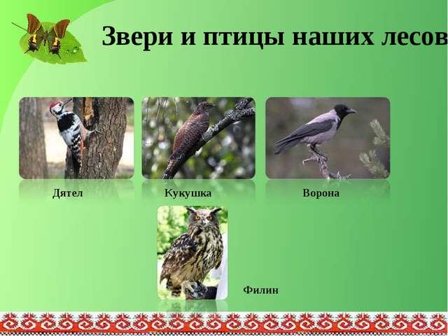 Звери и птицы наших лесов Дятел Кукушка Ворона Филин