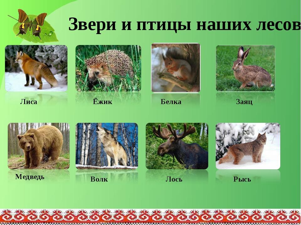 Звери и птицы наших лесов Белка Ёжик Лиса Заяц Медведь Волк Лось Рысь