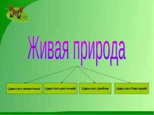 Царство животных Царство растений Царство грибов Царство бактерий