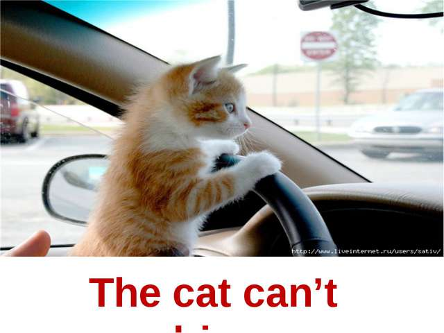 The cat can't drive.