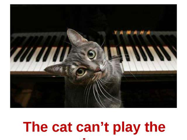 The cat can't play the piano.