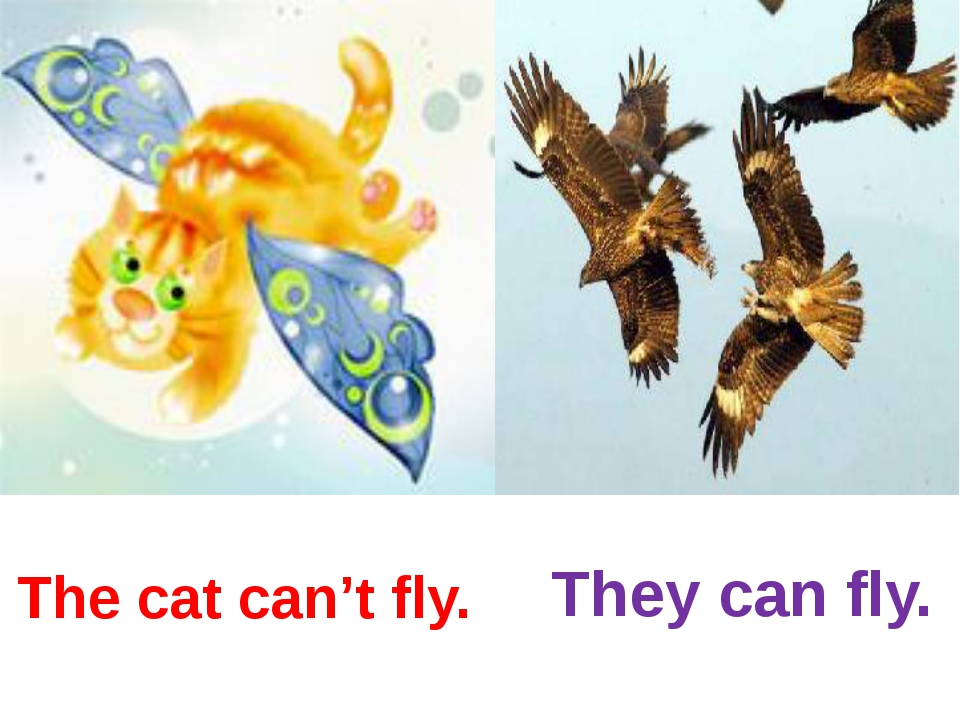 The cat can't fly. They can fly.