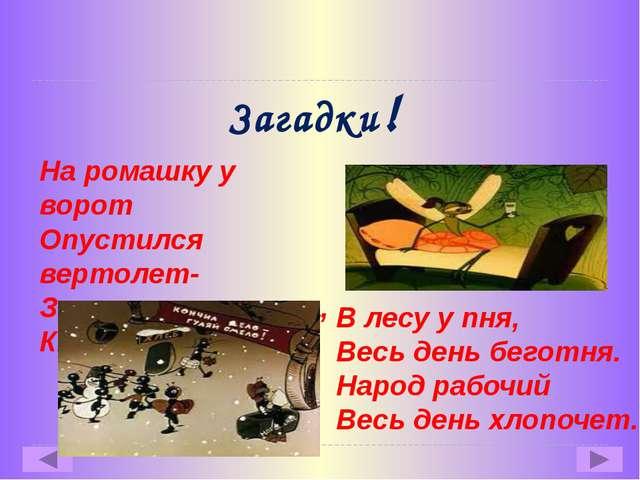 Загадки! На ромашку у ворот Опустился вертолет- Золотистые глаза, Кто же это…...