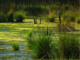 ЧИСТОПИСАНИЕ б л о о т о бл ло то ол болото Болото – болотный, болотце.
