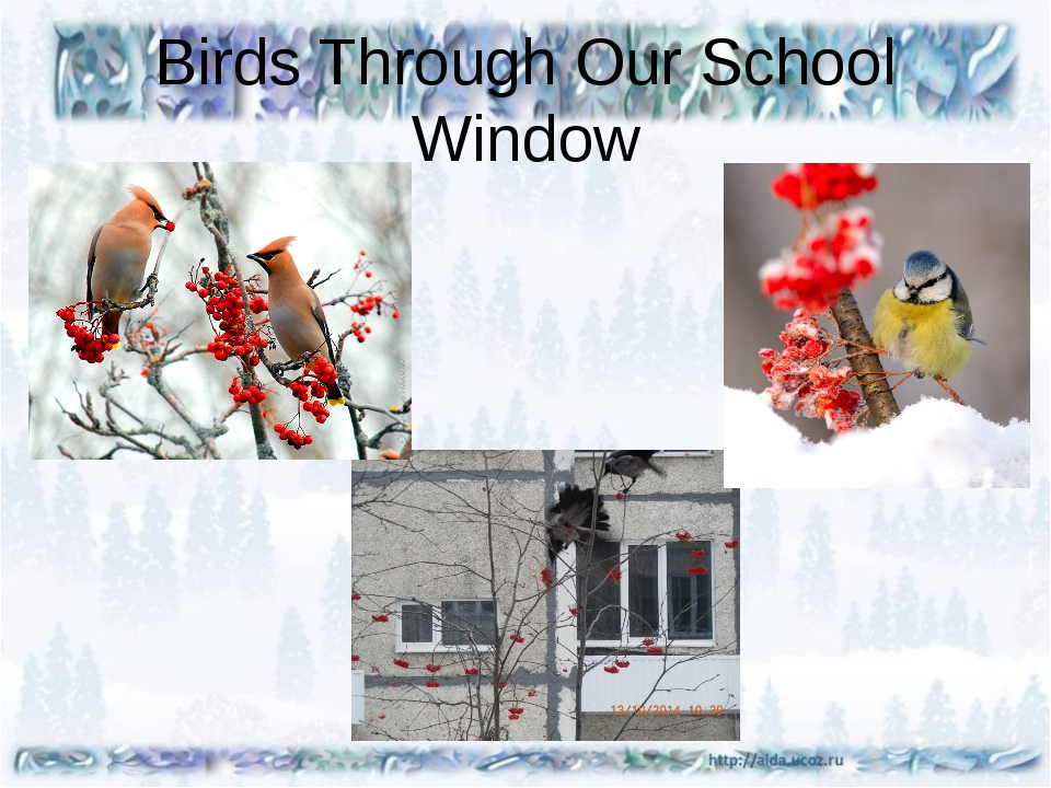 Birds Through Our School Window