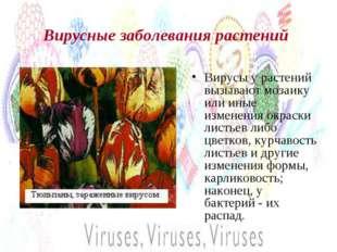 Вирусные заболевания растений Вирусы у растений вызывают мозаику или иные изм