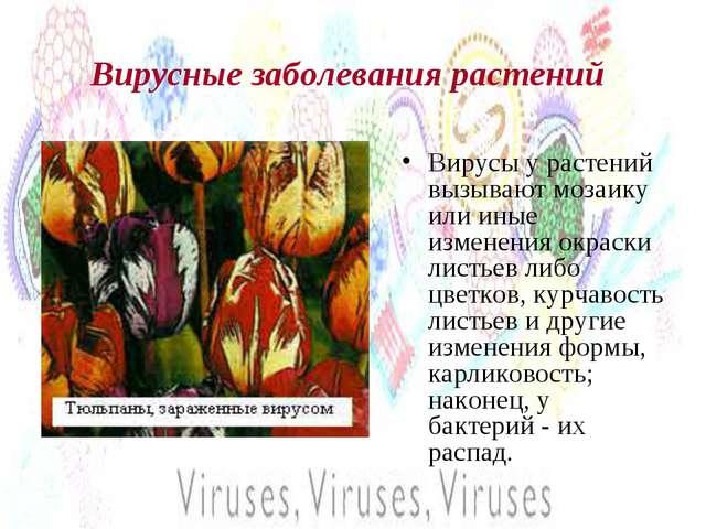 Вирусные заболевания растений Вирусы у растений вызывают мозаику или иные изм...