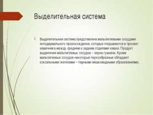 Выделительная система Выделительная система представлена мальпигиевыми сосуда