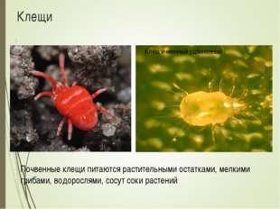 Клещи Почвенные клещи питаются растительными остатками, мелкими грибами, водо
