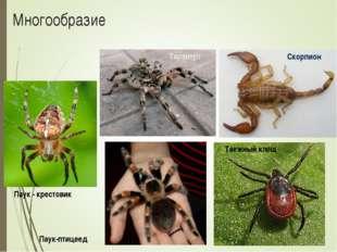 Многообразие Тарантул Скорпион Таежный клещ Паук-птицеед Паук - крестовик