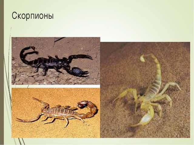 Скорпионы