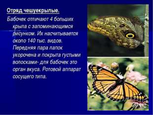 Отряд чешуекрылые. Бабочек отличают 4 больших крыла с запоминающимся рисунком