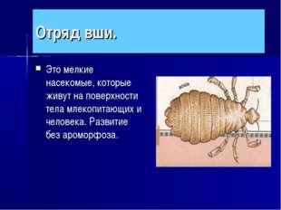 Отряд вши. Это мелкие насекомые, которые живут на поверхности тела млекопитаю