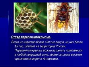 Отряд перепончатокрылые. Всего их известно более 100 тыс.видов, из них более