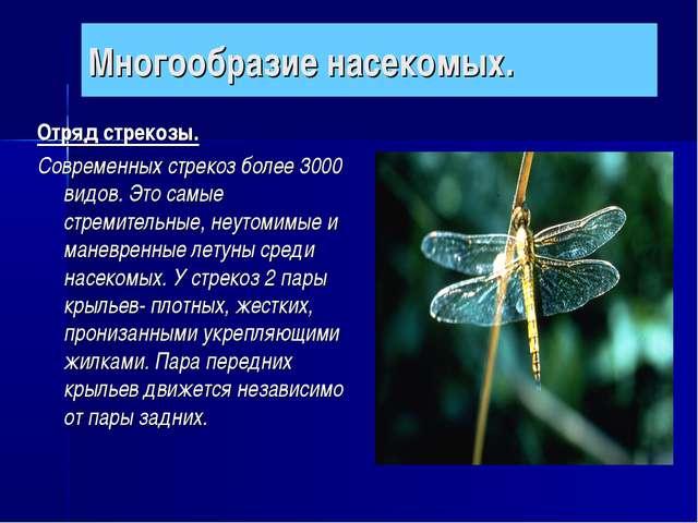 Многообразие насекомых. Отряд стрекозы. Современных стрекоз более 3000 видов....