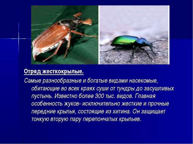 Отряд жесткокрылые. Самые разнообразные и богатые видами насекомые, обитающие...