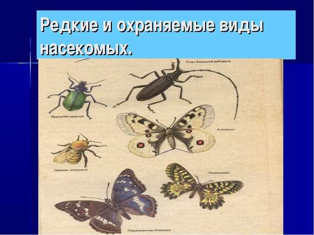Редкие и охраняемые виды насекомых.