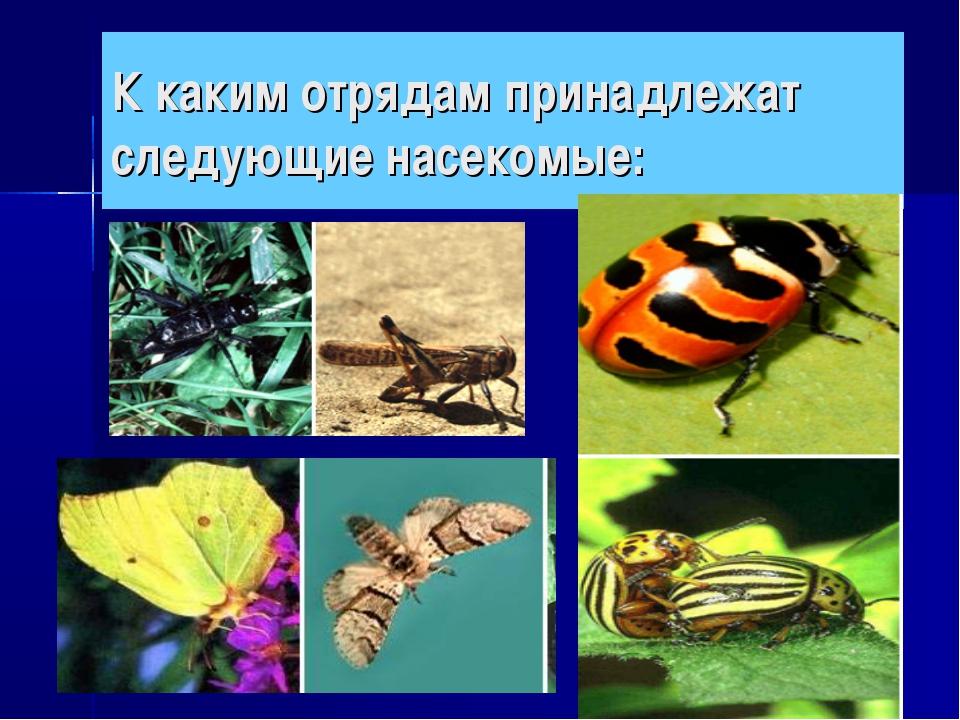 К каким отрядам принадлежат следующие насекомые:
