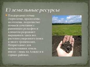 Плодородные почвы (черноземы, красноземы, желтоземы, подзолистые почвы)в соче