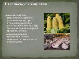 -растениеводство – выращивание зерновых (пшеница, сорго, просо, кукуруза), ма