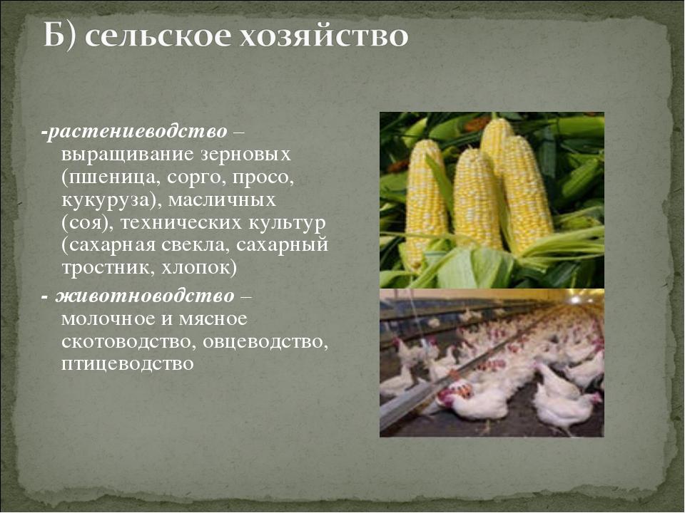 -растениеводство – выращивание зерновых (пшеница, сорго, просо, кукуруза), ма...
