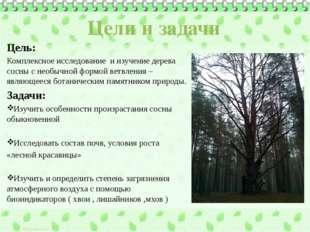 Цели и задачи Цель: Комплексное исследование и изучение дерева сосны с необыч