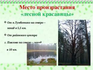 Место произрастания «лесной красавицы» От п.Тумботино на северо – запад в 5,5