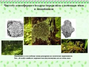 Чистоту атмосферного воздуха определяла с помощью мхов и лишайников Лишайники