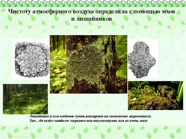 Чистоту атмосферного воздуха определяла с помощью мхов и лишайников Лишайники...