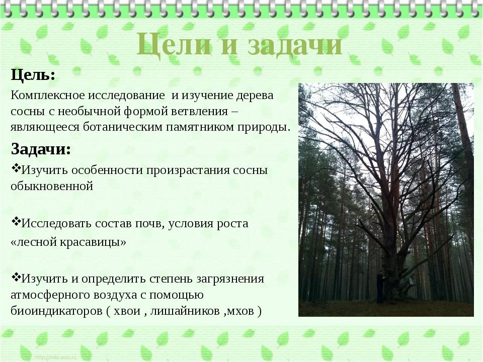 Цели и задачи Цель: Комплексное исследование и изучение дерева сосны с необыч...
