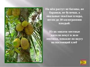 На нём растут не батоны, не баранки, не булочки, а овальные тяжёлые плоды, ве