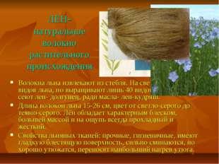 ЛЁН- натуральное волокно растительного происхождения Волокна льна извлекают и