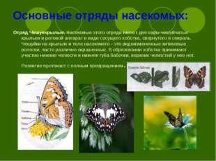 Основные отряды насекомых: Отряд Чешуекрылые.Насекомые этого отряда имеют дв
