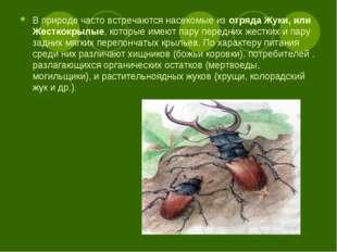 В природе часто встречаются насекомые изотряда Жуки, или Жесткокрылые, котор