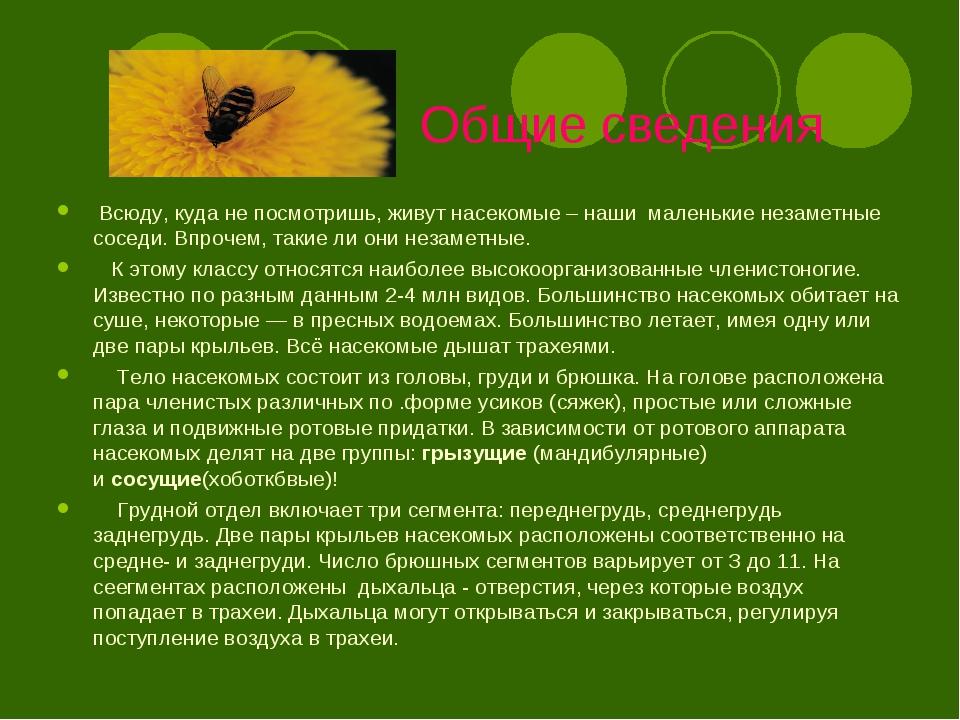Общие сведения Всюду, куда не посмотришь, живут насекомые – наши маленькие н...